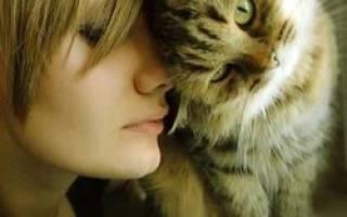 К чему снится ласковая кошка