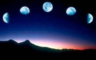 Сонник луна большая