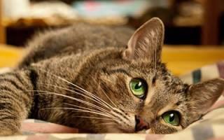 К чему снится раненая кошка в крови