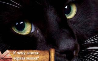 К чему снится много черных кошек